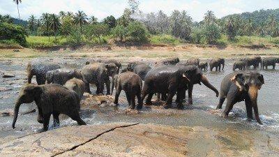 Poznání jihozápadu Srí Lanky za 5 nocí