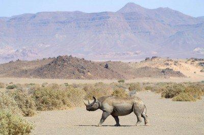 O Namibii