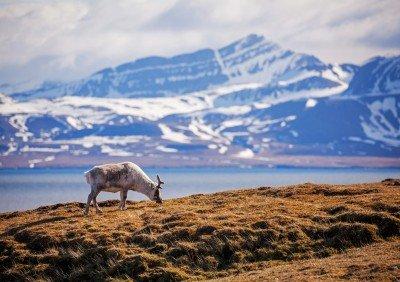 Luxusný Polární expedice