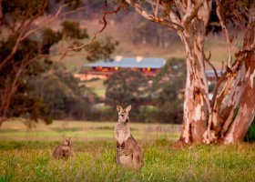 australie-hotel-one-only-wolgan-valley-013.jpg