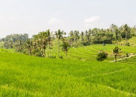 bali-ostrov-bohu-a-lombok-013.jpg