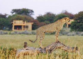 botswana-hotel-calahari-plains-camp-020.jpg