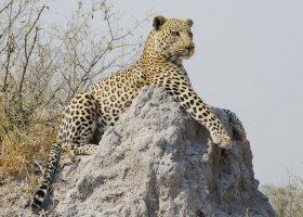 botswana-hotel-kings-pool-camp-041.jpg
