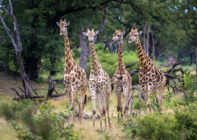 botswana-hotel-kings-pool-camp-065.jpg