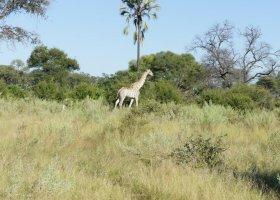 botswana-hotel-kwetsani-camp-002.jpg