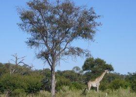 botswana-hotel-kwetsani-camp-009.jpg