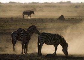 botswana-hotel-savuti-camp-039.jpg