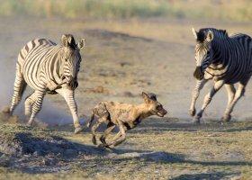 botswana-hotel-savuti-camp-041.jpg