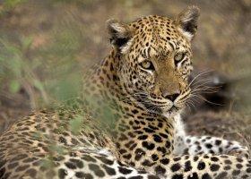 botswana-hotel-savuti-camp-043.jpg