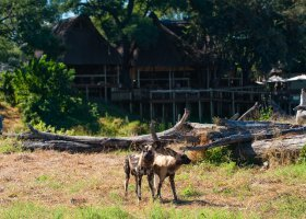 botswana-hotel-savuti-camp-047.jpg