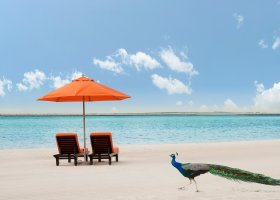 dubaj-hotel-ja-palm-tree-court-074.jpg