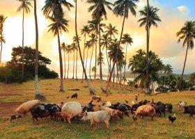 fidzi-hotel-matangi-private-island-resort-034.jpg