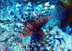 fidzi-hotel-taveuni-palms-025.jpg