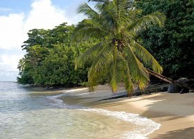 fidzi-hotel-taveuni-palms-028.jpg