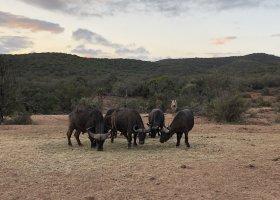 jihoafricka-republika-cesta-nabita-neuveritelnymi-zazitky-047.jpeg