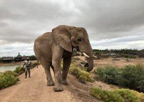 jihoafricka-republika-cesta-nabita-neuveritelnymi-zazitky-053.jpeg