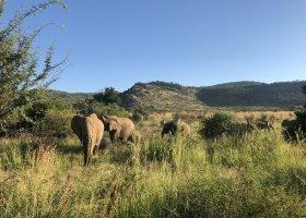 jihoafricka-republika-cesta-nabita-neuveritelnymi-zazitky-057.jpeg