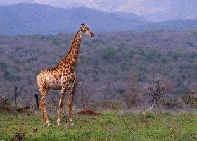 jihoafricka-republika-hotel-amakhosi-safari-lodge-042.jpg