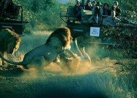 jihoafricka-republika-hotel-thornybush-game-lodge-012.jpg