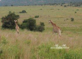 juhoafricka-republika-januar-2011-009.jpg