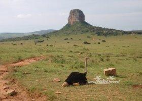 juhoafricka-republika-januar-2011-011.jpg
