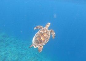 maledivy-15-04-24-04-2021-cocoon-maldives-057.jpg