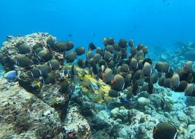 maledivy-15-04-24-04-2021-cocoon-maldives-058.jpg