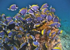 maledivy-hotel-baros-maldives-124.jpg