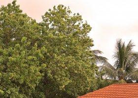 maledivy-hotel-lily-beach-resort-119.jpg