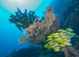 maledivy-hotel-sun-aqua-vilu-reef-052.jpg