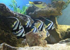 mauricijske-akvarium-001.jpg