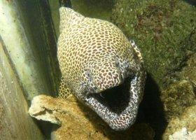 mauricijske-akvarium-002.jpg