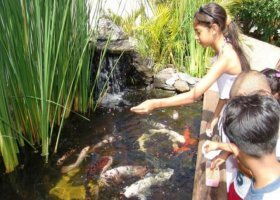 mauricijske-akvarium-004.jpg