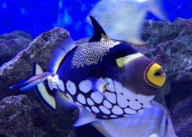 mauricijske-akvarium-006.jpg