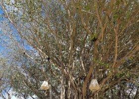 mauricius-2019-krizem-krazem-po-rozmanitem-ostrove-009.jpg