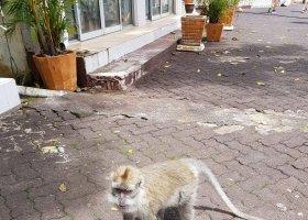 mauricius-2019-krizem-krazem-po-rozmanitem-ostrove-027.jpg