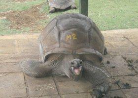 mauritius-listopad-2012-048.jpg