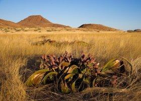 namibie-hotel-damaraland-camp-019.jpg