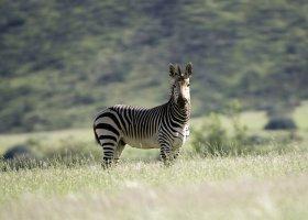 namibie-hotel-damaraland-camp-022.jpg