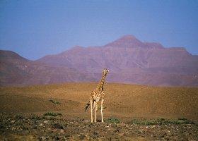 namibie-hotel-damaraland-camp-024.jpg