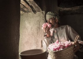výroba růžové vody