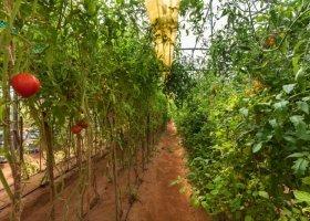 farma v Dibbě