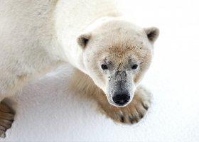 polarni-expedice-101.jpg