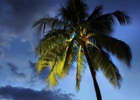 polynesie-hotel-le-meridien-tahiti-087.jpg