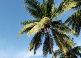 polynesie-hotel-sofitel-ia-ora-beach-resort-002.jpg