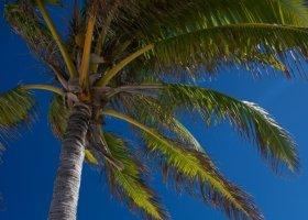 polynesie-hotel-the-brando-036.jpg