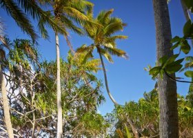 polynesie-hotel-the-brando-038.jpg