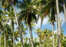 polynesie-hotel-the-brando-067.jpg