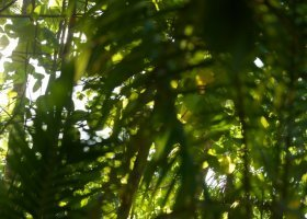 polynesie-hotel-the-brando-153.jpg