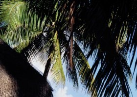 polynesie-hotel-tikehau-pearl-beach-resort-046.jpg